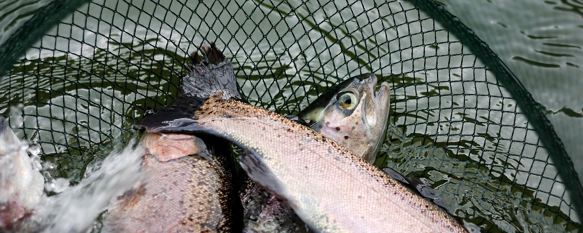 Fische artgerecht und sicher transportieren
